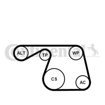 Keilrippenriemensatz -- CONTITECH, FIAT, LANCIA, DOBLO Cargo (223), ...
